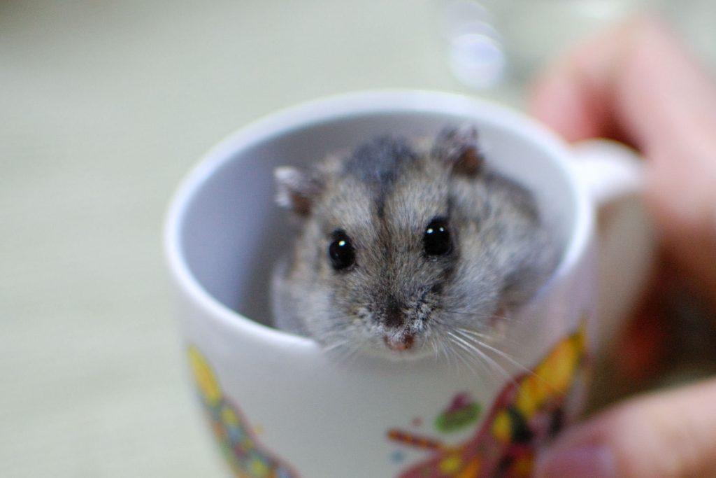 ひとり暮らしで癒されたい人のために飼いやすい小動物とは