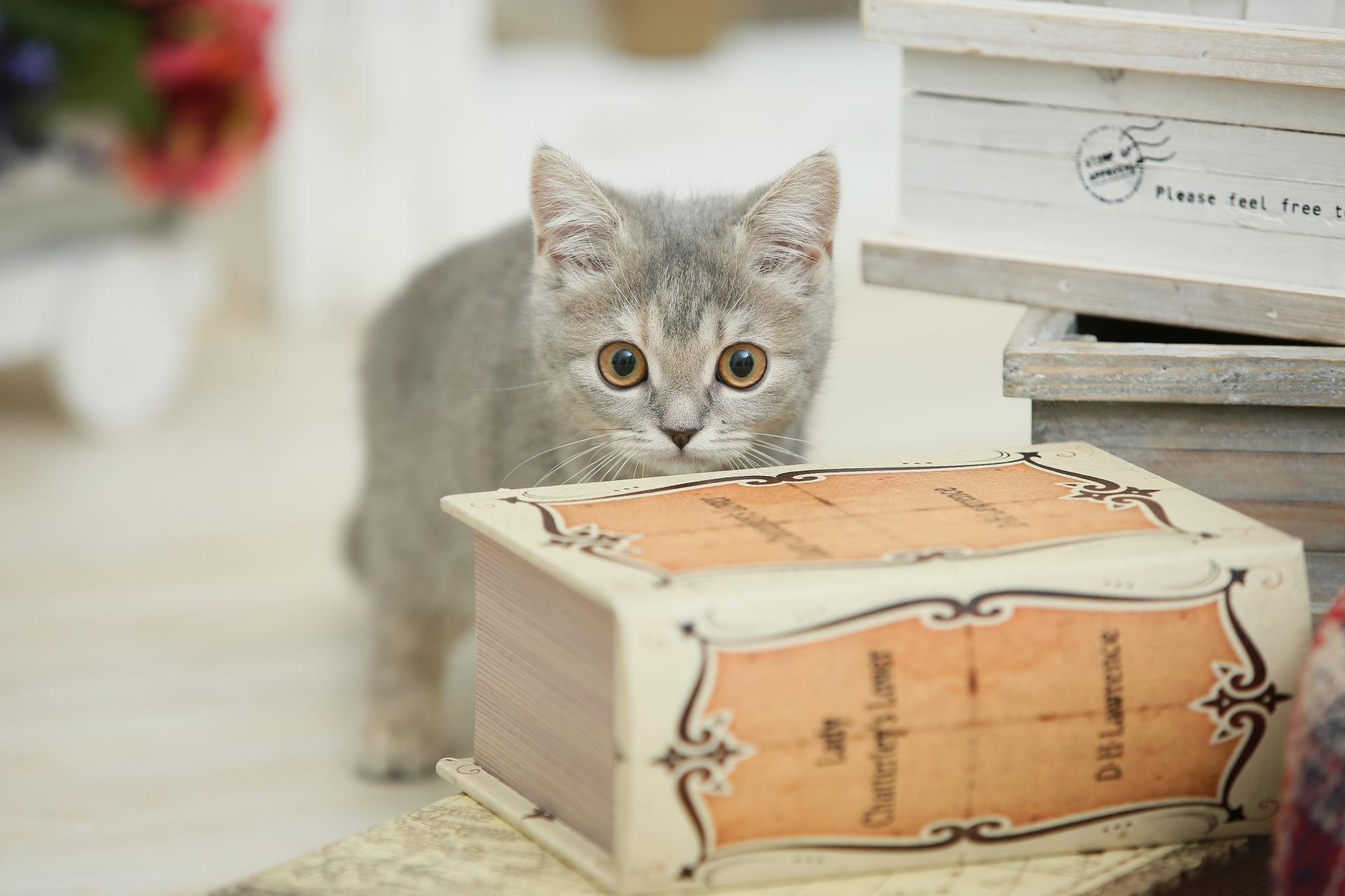 猫を初めて飼うときに覚えておきたいこと!5つの基本
