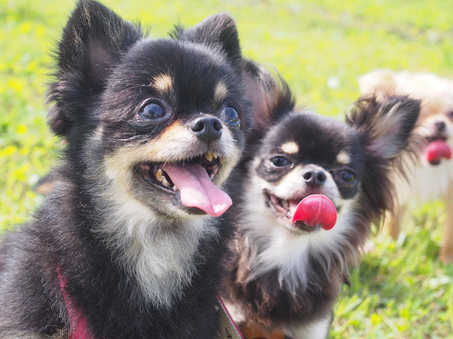 犬を飼う前に知りたい初期費用はいくら?その内訳は?