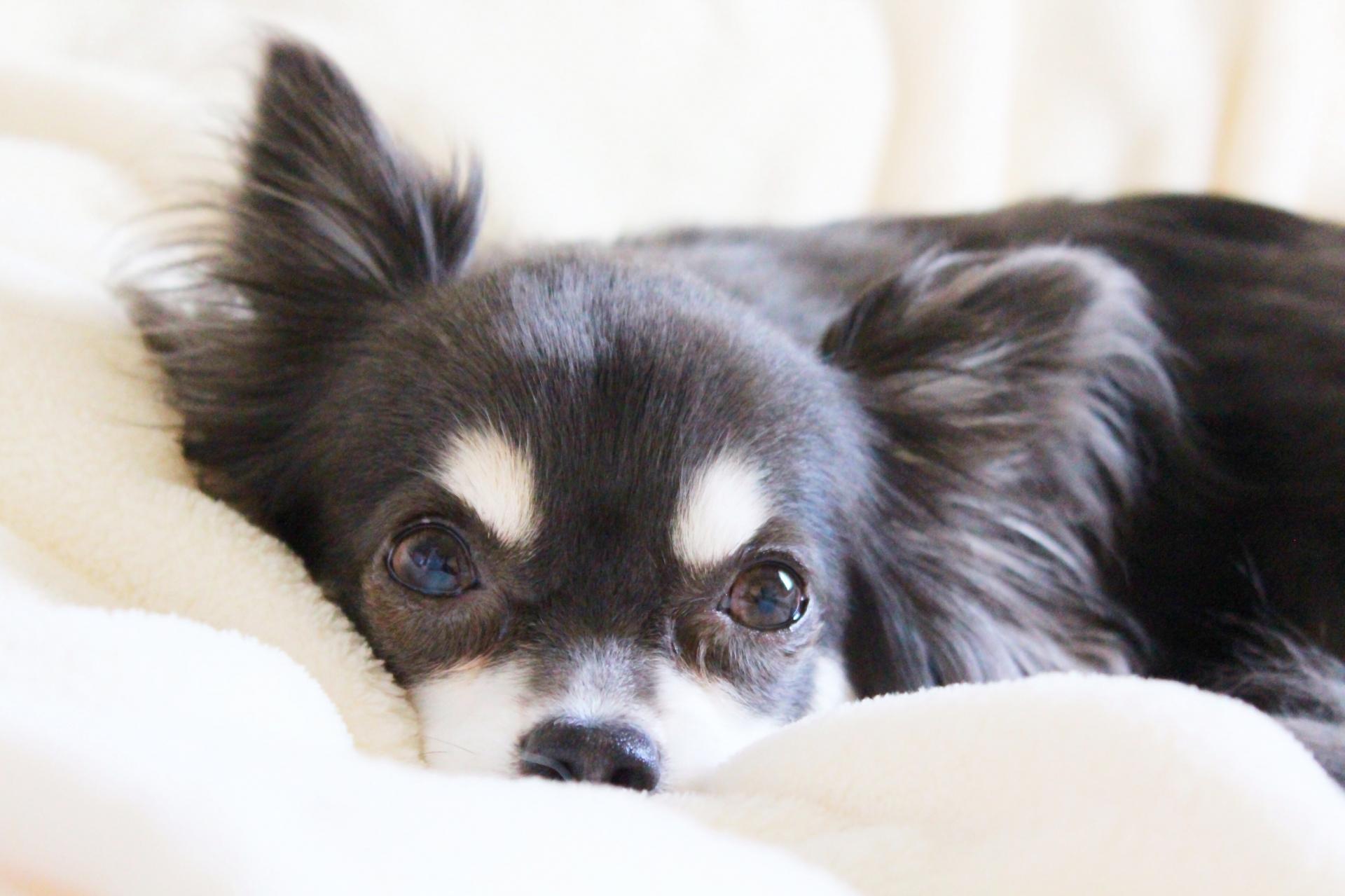 愛犬が老犬になったときの飼い主の心構えとその知識について
