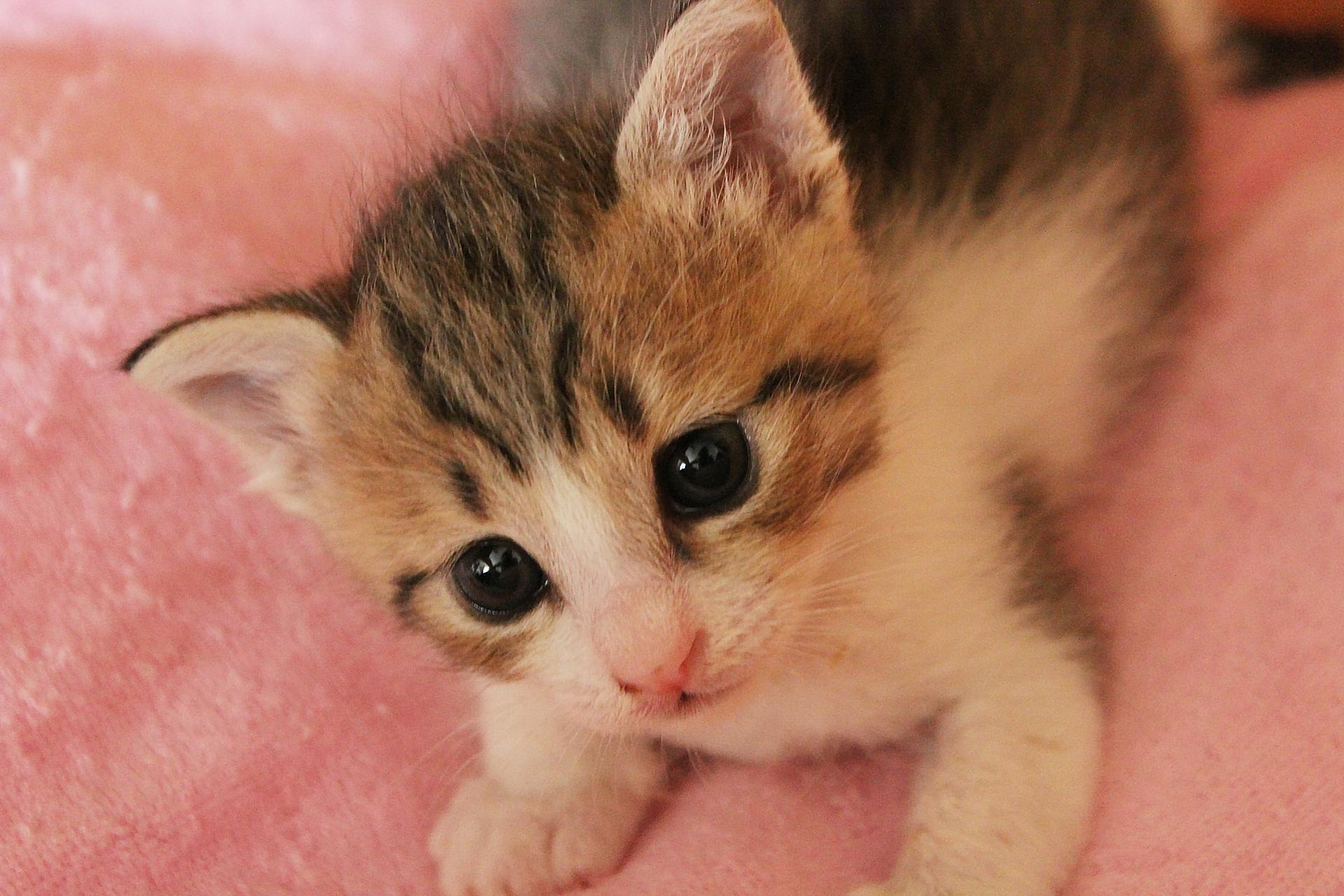 猫が好きな食べ物は何?食べさせてはいけない食べ物について