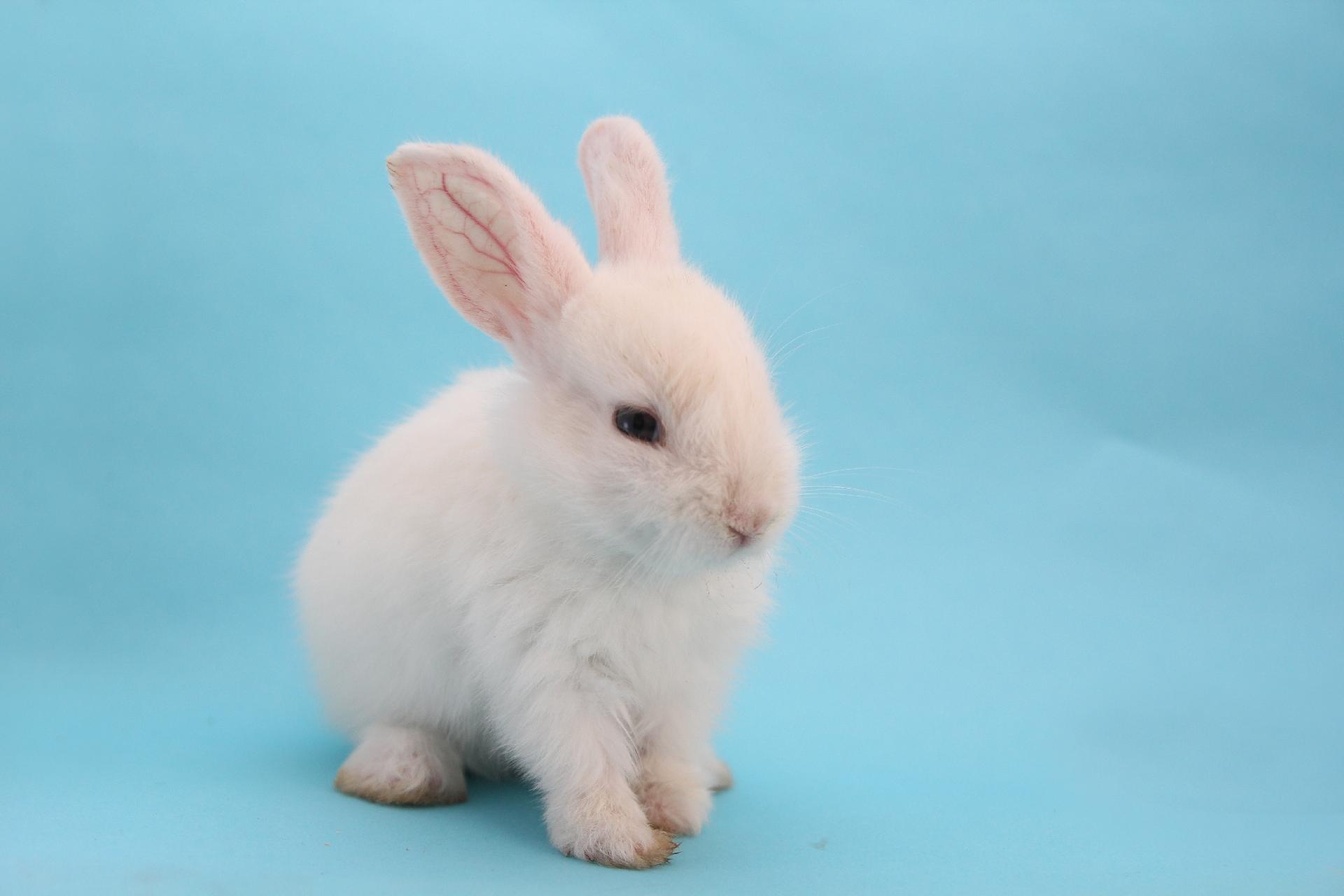 寂しいと死んでしまうウサギは本当にいるの?-ウサギの飼い方について