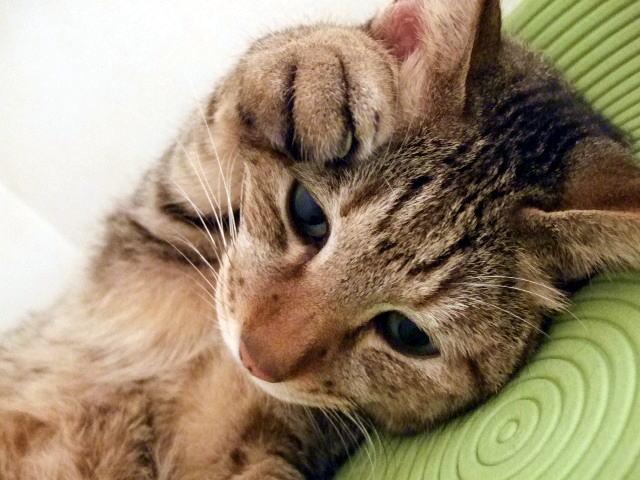 猫が喜ぶ撫で方とは?気持ちいいツボ教えます!