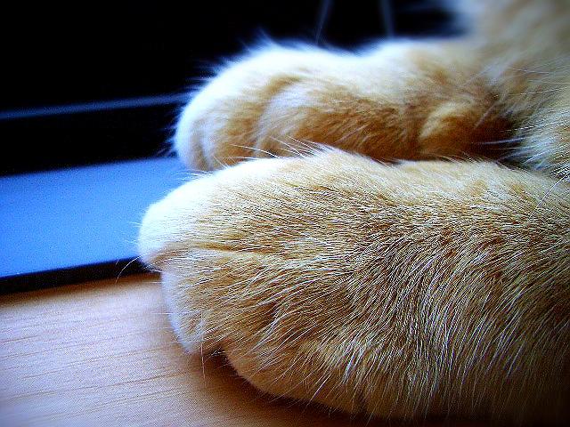 正しいマダニ対策で犬や猫を感染症から守る方法