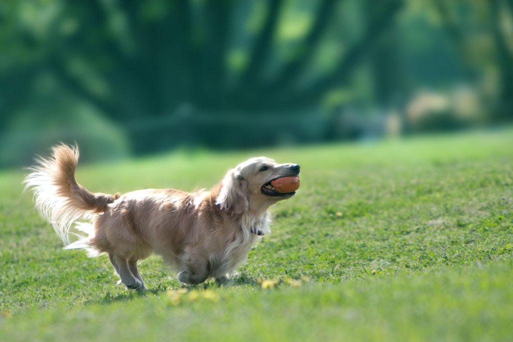 犬を家族にするとき里親になるという選択とは