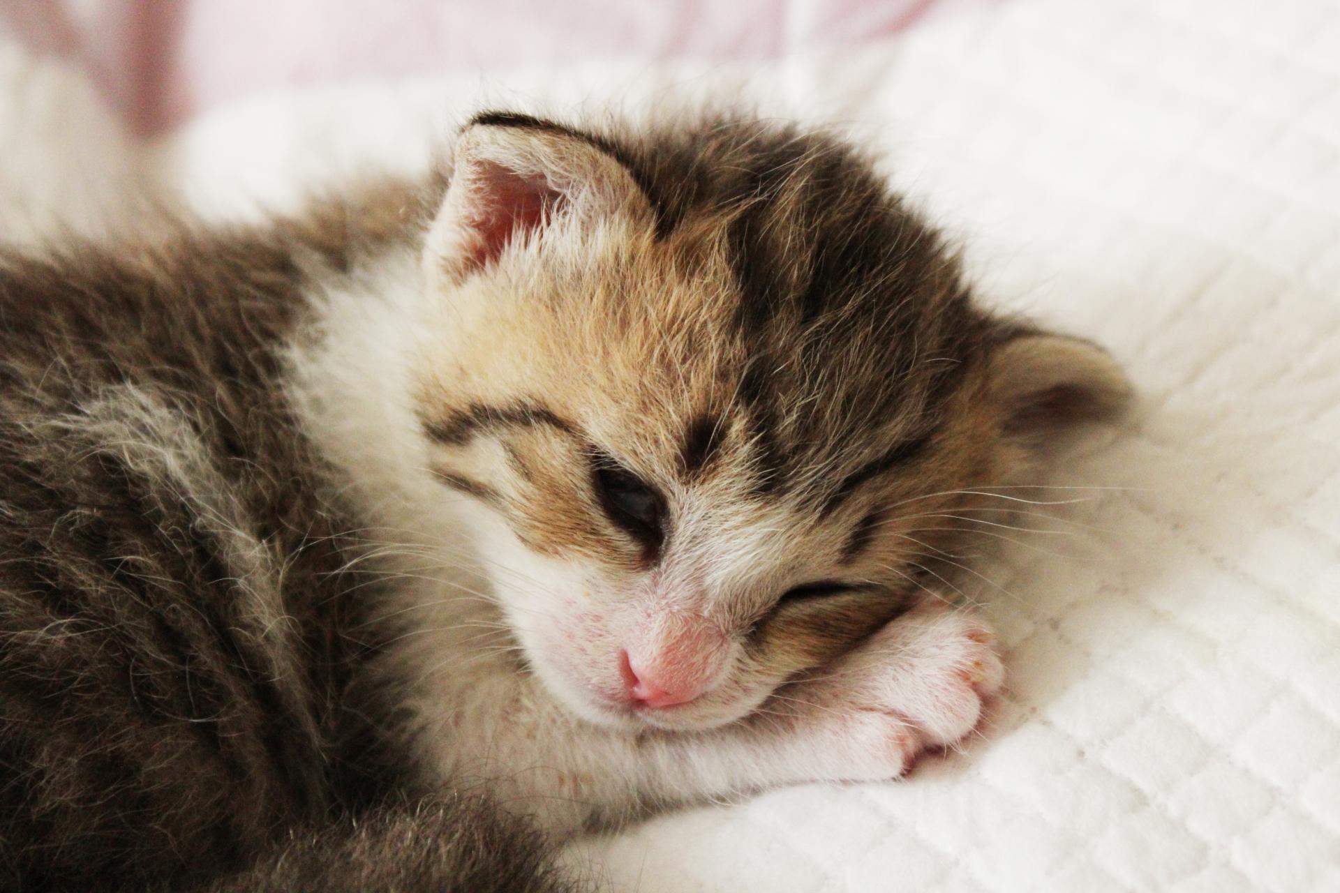 猫の嘔吐で慌てない!吐く原因と病気について