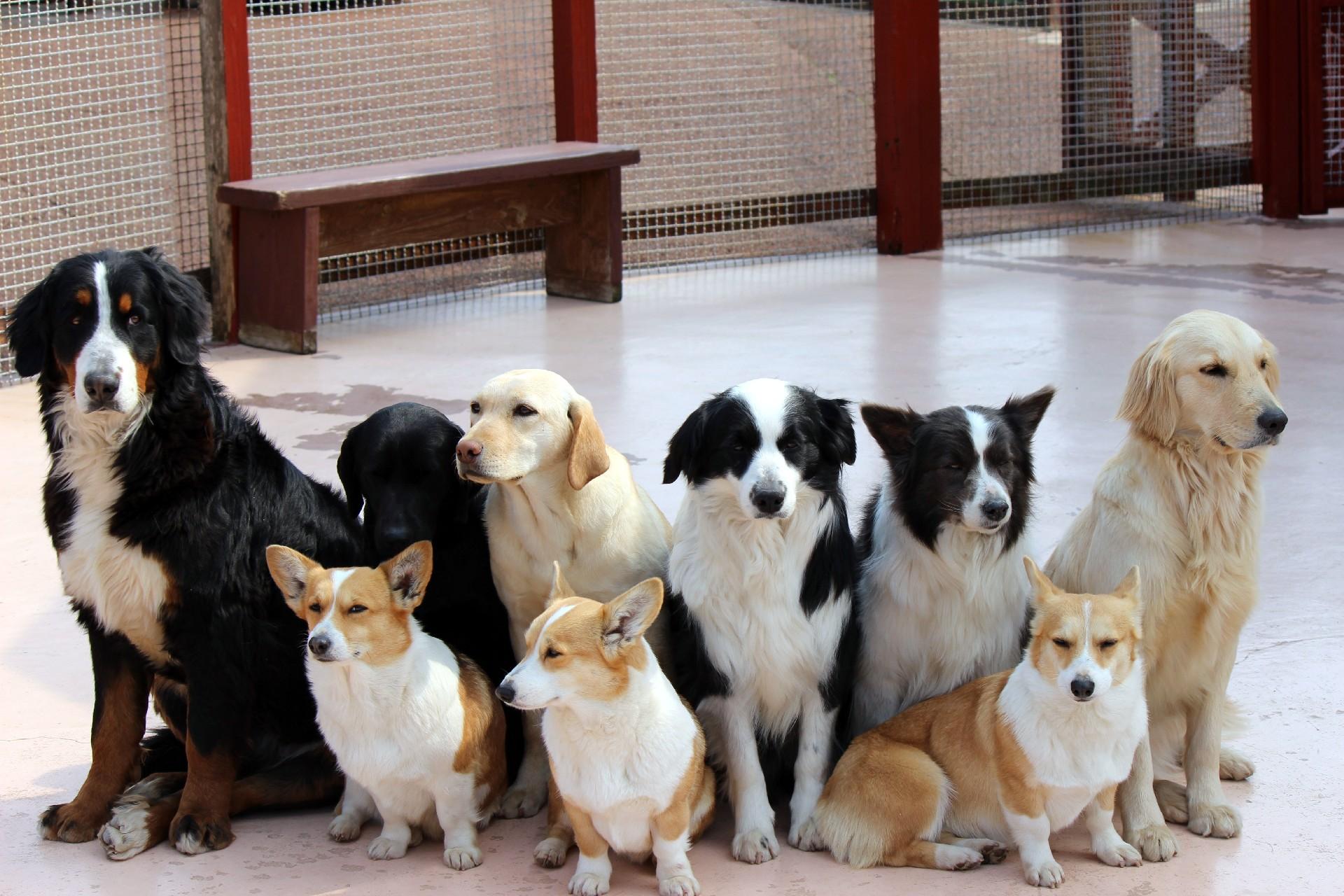 ペットに保険加入は必要か?悩める飼い主の方へ