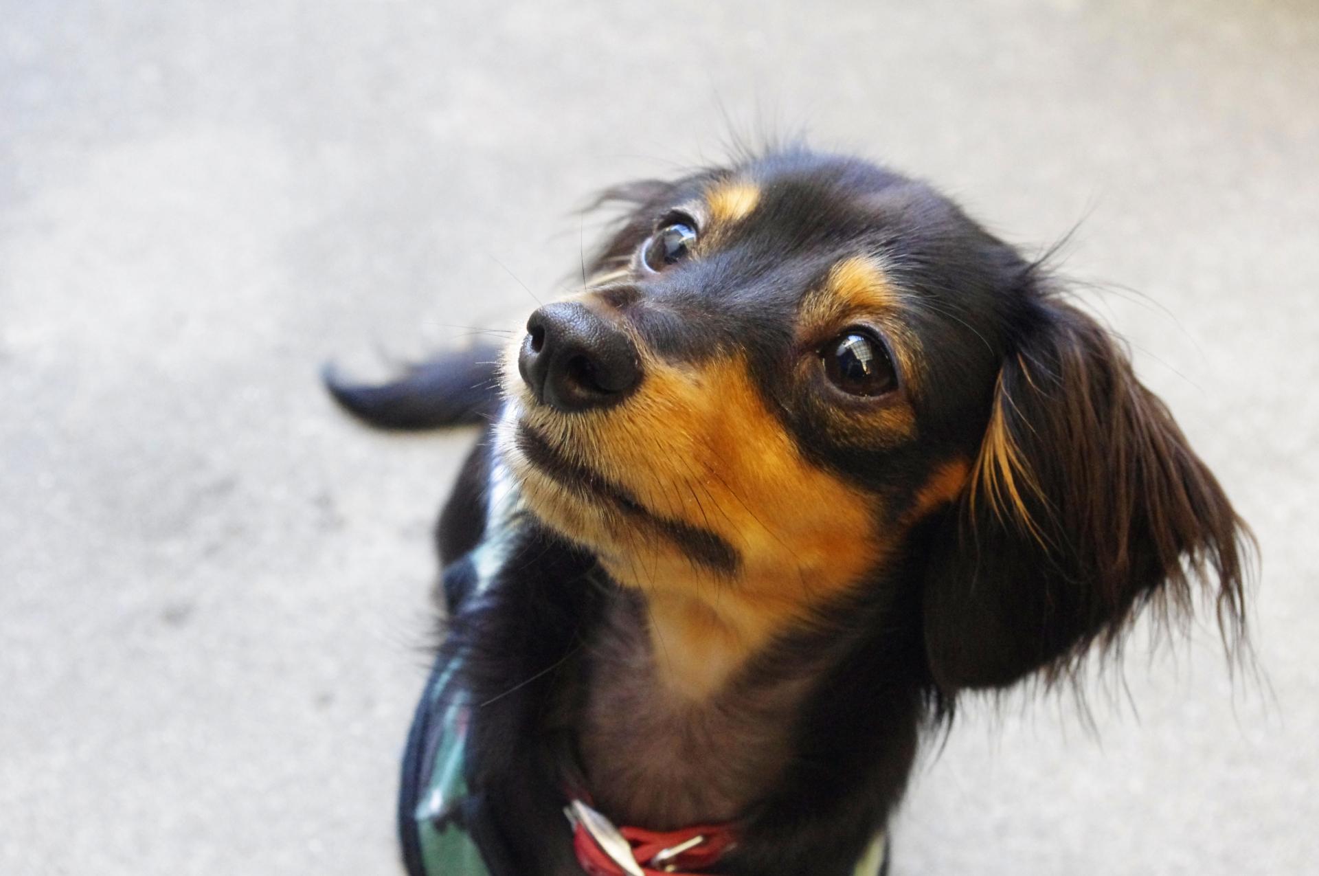 愛犬に芸を教えることはできる?簡単に芸を教える方法