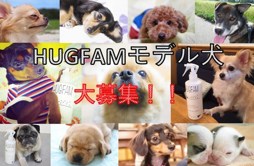 HUGFAMモデル犬募集キャンペーン終了のお知らせ
