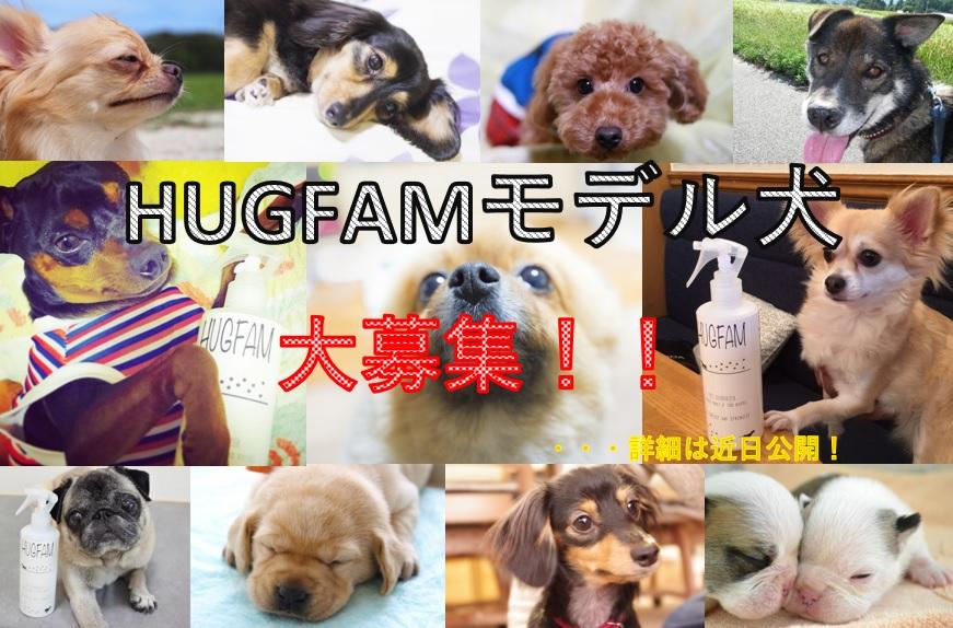 HUGFAMモデル犬を募集します!-応募期間-