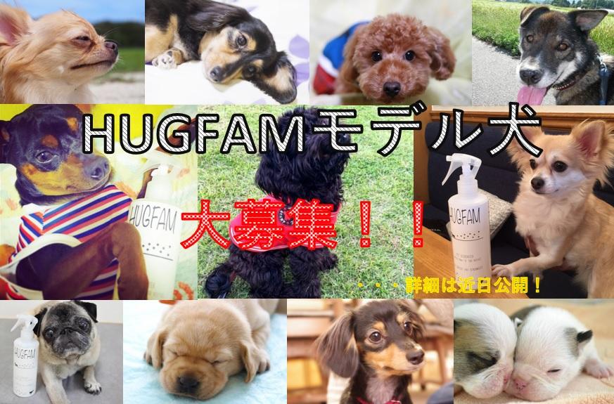 HUGFAMモデル犬を募集します!