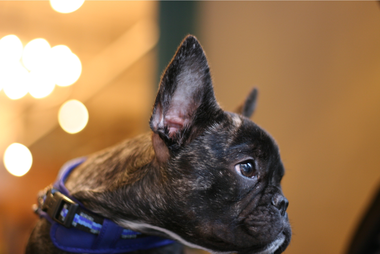 モデル犬RioくんDiary1 ー撮影現場にてー