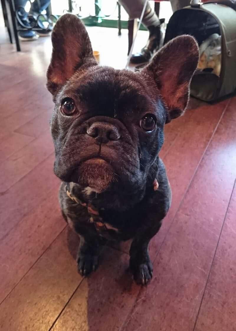 モデル犬RioくんDiary3 ーお店のブログに載せて頂きました!ー