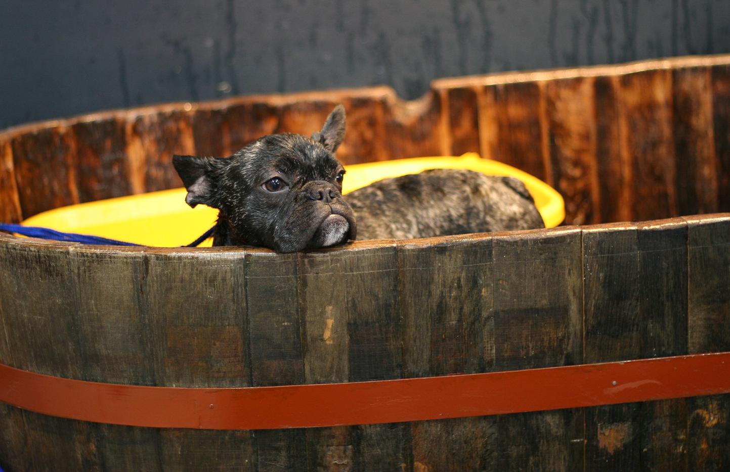 モデル犬RioくんDairy4 ードッグサロンにてー